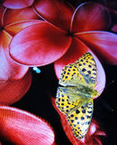 Orange butterfly perched on the flower of a screen Royalty Free Stock Images