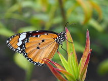 Orange butterfly on a plant. In a park royalty free stock image