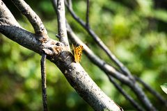 Orange butterfly resting on a branch stock photography