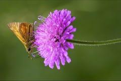 orange butterfly resting green Stock Photo