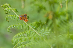 Orange butterfly resting Stock Photos