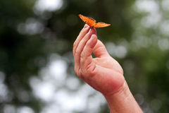 Orange Butterfly Rests On Fingertips Of Man's Hand. A butterfly rests on the fingertips of a man's hand royalty free stock image