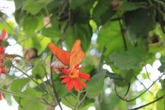 Orange butterfly, Shenandoah Mountains. Orange butterfly and wildflowers in the mountains of Shenandoah stock photo
