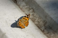 An orange butterfly sits on concrete during the summer day. Close-up. Close-up An orange butterfly sits on concrete during the summer day, flower, background stock photography