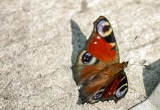 An orange butterfly sits on concrete during the summer day. Close-up. Close-up An orange butterfly sits on concrete during the summer day, flower, background royalty free stock images