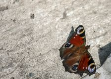 An orange butterfly sits on concrete during the summer day. Close-up. Close-up An orange butterfly sits on concrete during the summer day, flower, background stock images