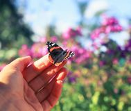 Orange butterfly sits on the fingers of a man`s hand and is goi stock photos