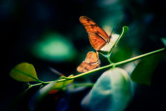Orange Butterfly Sitting on Green Leaf Stock Image
