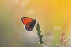 orange butterfly sitting on a sun-drenched meadow Stock Photography
