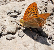 Orange butterfly. Standing on the ground, picture taken at Benasque - Spain stock image