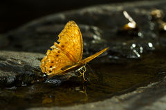 Orange butterfly on stone Royalty Free Stock Photography