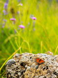 Orange butterfly on a stone Royalty Free Stock Photography
