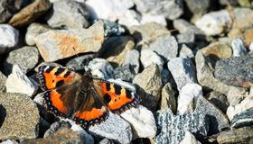 Orange butterfly on the stones royalty free stock photo
