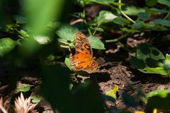 Orange butterfly standing at the garden stock photography