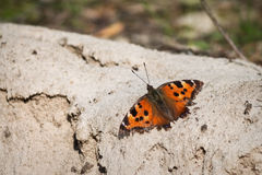 Orange butterfly urticaria. Closeup on a background of sand Stock Photo