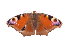 Orange butterfly. On a white background royalty free stock photos