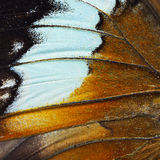 Orange butterfly wing Royalty Free Stock Image