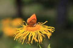 Orange butterfly on yellow flower stock images