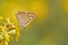 An orange butterfly on a yellow flower royalty free stock photo