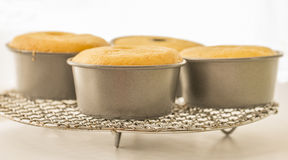 Orange Cakes in Tin Moulds Royalty Free Stock Images