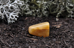 Orange calcite on forest floor Royalty Free Stock Photos