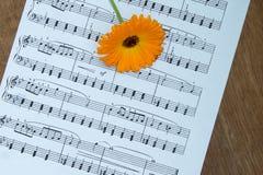 Orange calendula flower on music notes sheet. Wood table. Top vi Stock Photo