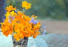 Orange calendula flowers Royalty Free Stock Photography