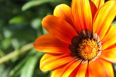 Orange calendulablommanärbild inom en grön fältbakgrund Royaltyfria Bilder
