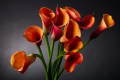 Orange Calla lilies (Zantedeschia) over black Stock Images
