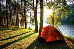 Orange camping tents in pine tree forest by the lake
