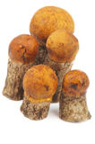 Orange-Cap Boletus Royalty Free Stock Photos