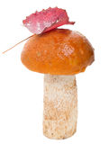 Orange-cap boletus with leaf Stock Photos