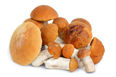 Orange Cap Boletus mushrooms Stock Image