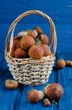 Orange-cap boletus mushrooms (aspen mushrooms) Royalty Free Stock Photography