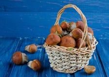 Orange-cap boletus mushrooms (aspen mushrooms) Royalty Free Stock Photos