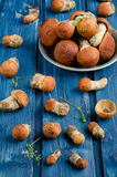 Orange-cap boletus mushrooms (aspen mushrooms) Stock Photos