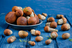 Orange-cap boletus mushrooms (aspen mushrooms) Royalty Free Stock Photo
