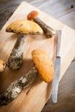Orange-cap boletus mushrooms Royalty Free Stock Photo