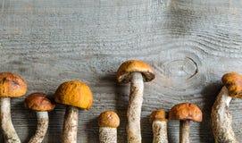 Orange-cap boletus mushrooms Stock Photos