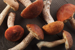 Orange-cap boletus Royalty Free Stock Image