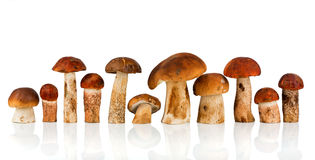 Orange-cap Boletus and porcini mushroom Stock Image