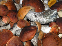 Orange-cap mushrooms Royalty Free Stock Images