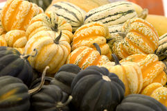 Orange carnival squash Royalty Free Stock Images