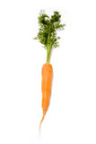 Orange carrot root. And greens isolated against a white studio background Royalty Free Stock Photography