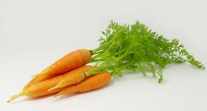 Orange carrots Stock Image