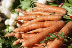 Orange Carrots. Bunches of carrots wait to be purchased at a farmer's market Royalty Free Stock Photo