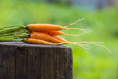 Orange carrots on a stump. Many orange carrots on a wooden stump with green background Royalty Free Stock Photos