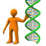 Manikin DNA Stock Photo