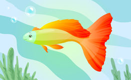 Orange cartoon fish Stock Image