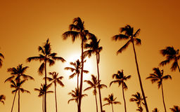 Orange Cast Palm Trees Stock Photography